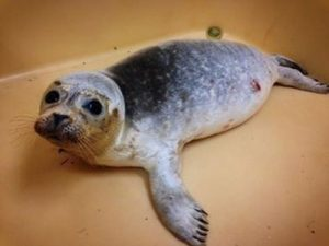 zeehond zonder naam